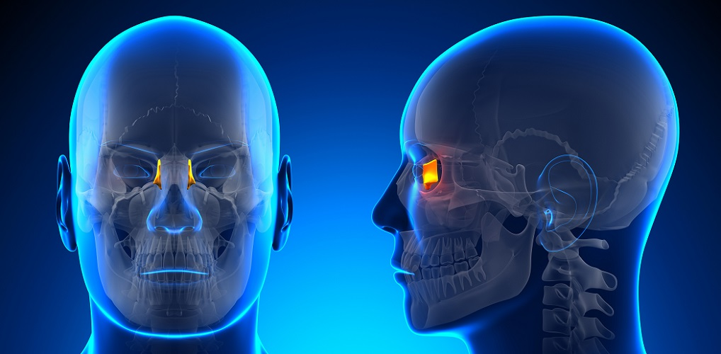 lacrimal bone
