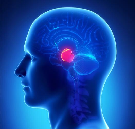 Localization of midbrain in brain
