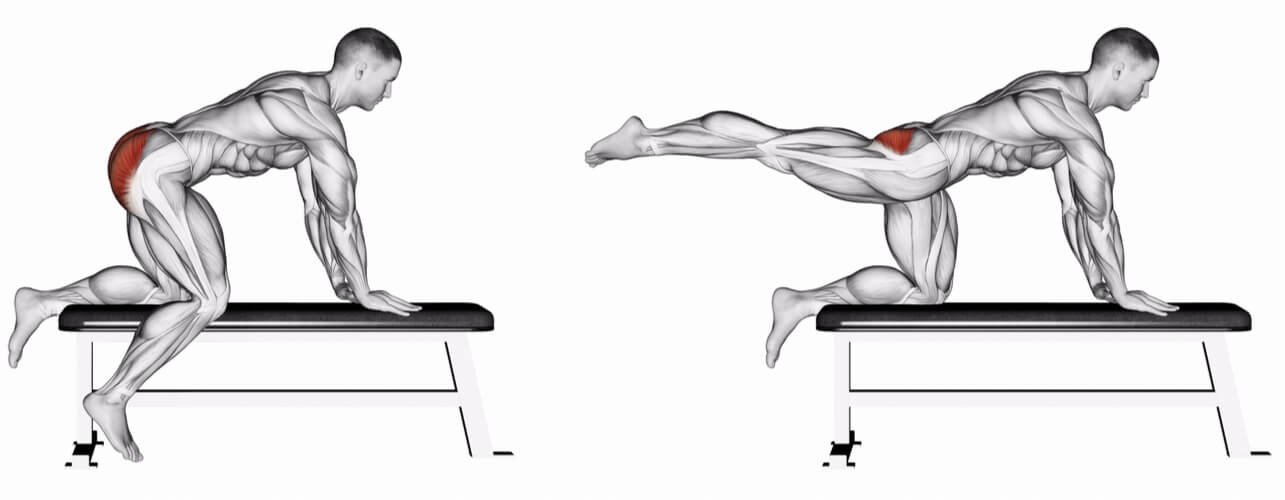 Leg lifting exercise emphasizing the gluteus maximus highlighted in red