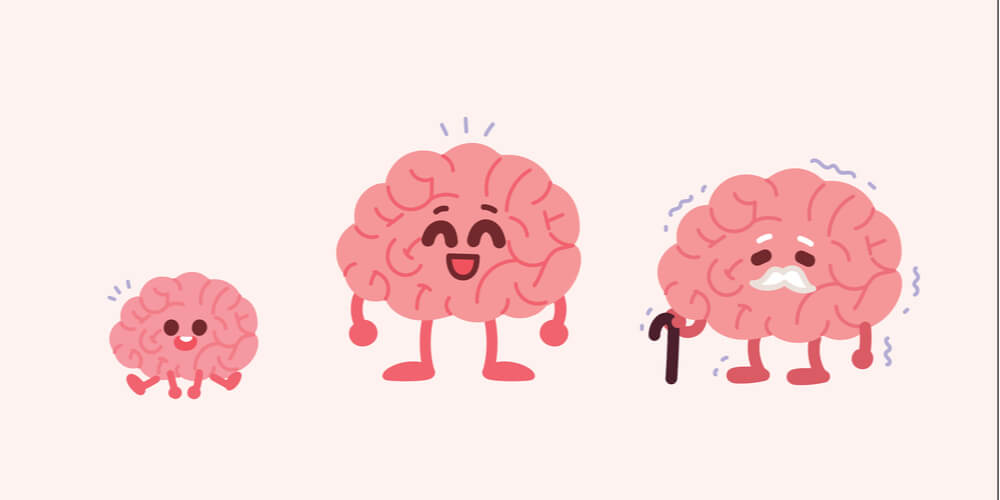 Cartoon showing increased brain size from baby to adult, but a slight decrease from adult to elderly person
