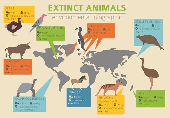 Diagram of animals that have gone extinct around the world