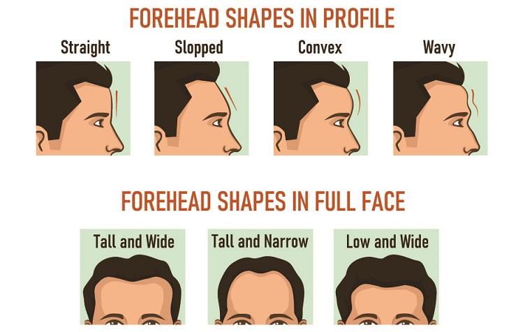 forehead shapes frontal eminences supraorbital superciliary arch ridge face shape