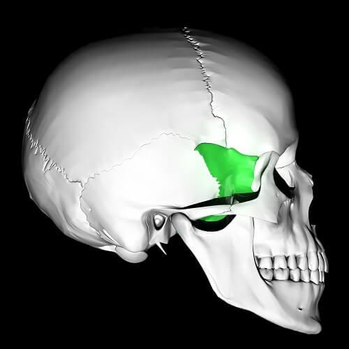 greater wings sphenoid bone pterion