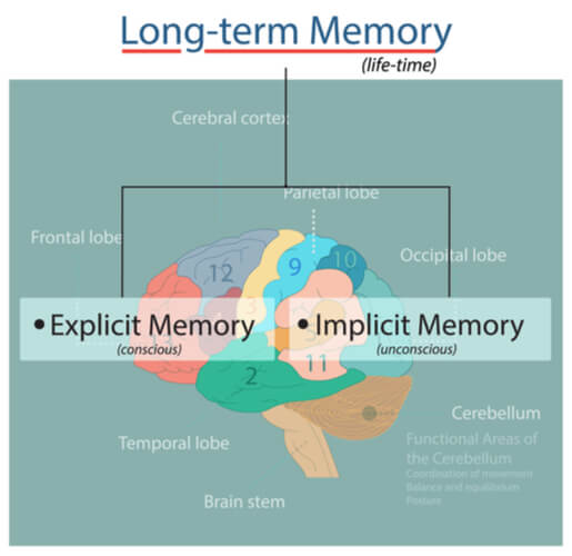 Long term memory pointing to implicit and explicit errors over a segmented brain with labeled lobes