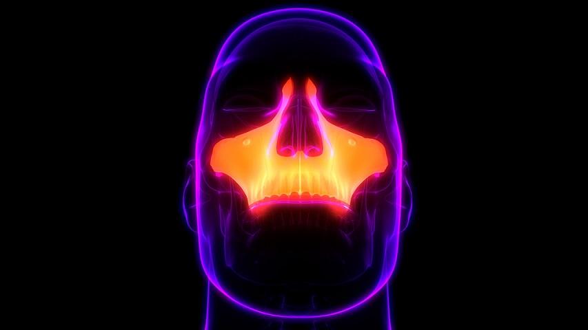 maxilla bone palatine bone palatine process of