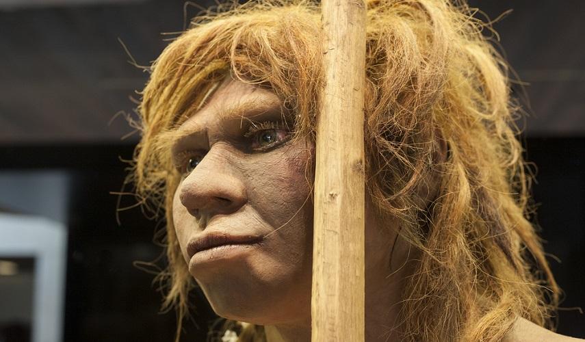 neanderthal supraorbital ridge frontal bone forehead bossing human