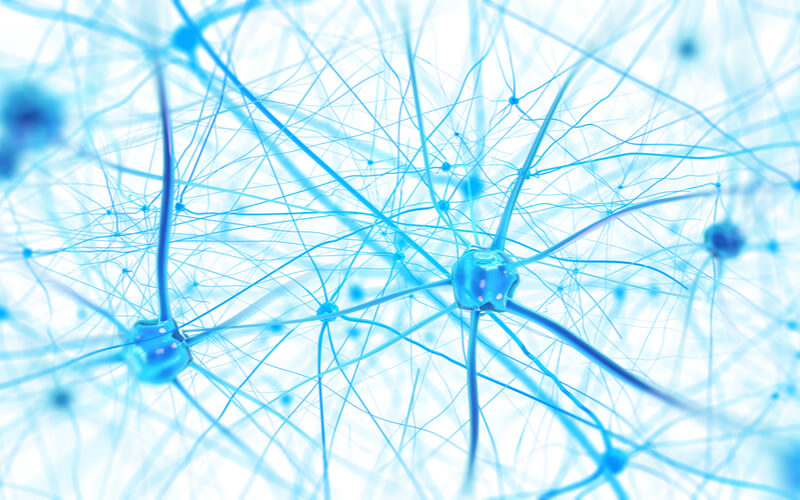 Blue neurons to show neural connections needed for memory