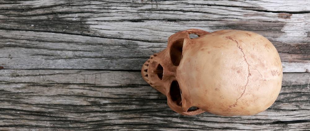 skull cranium human orbits frontal bone parietal