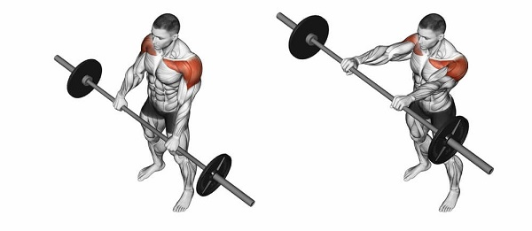 The deltoid muscle helps move the arm in an upward motion, but only when the palms face downward.