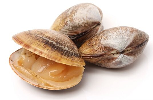 clams on a whitebckground
