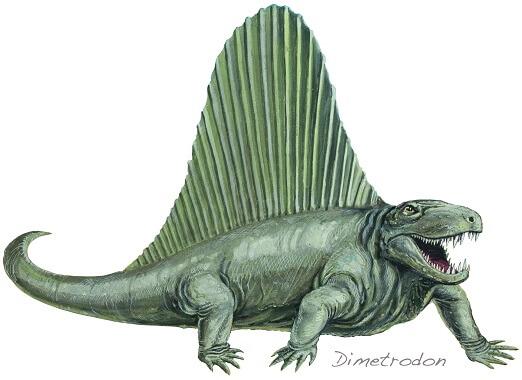 A drawing of a Dimetrodon