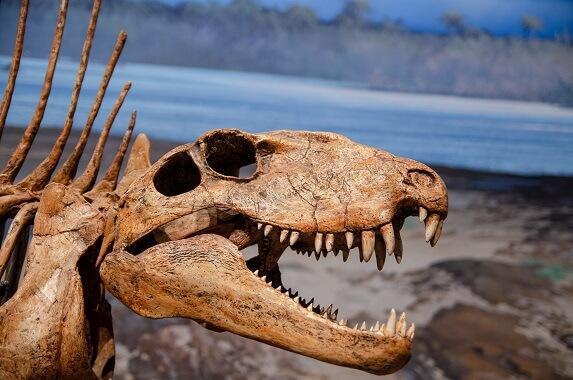 A dimetrodon skull showing its teeth.