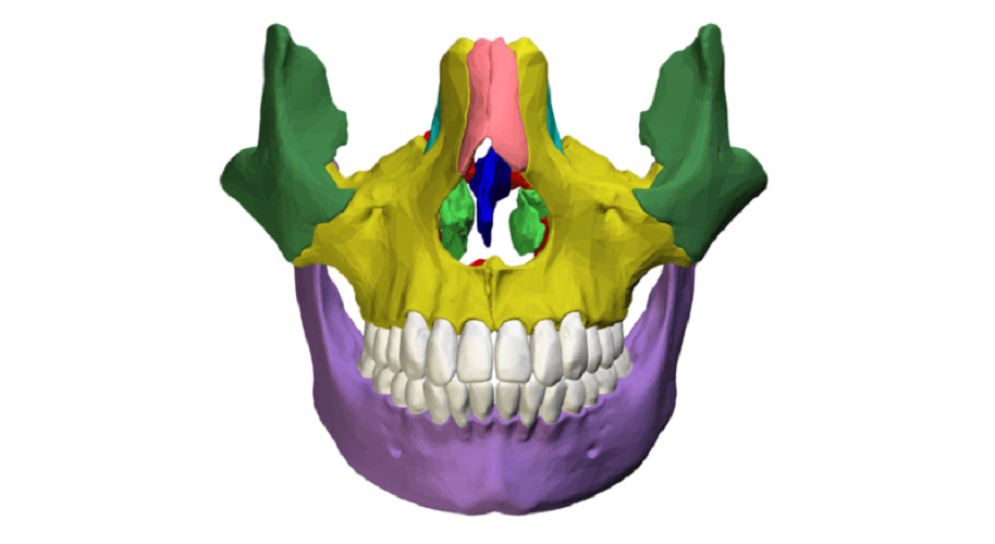 facial bones viscerocranium