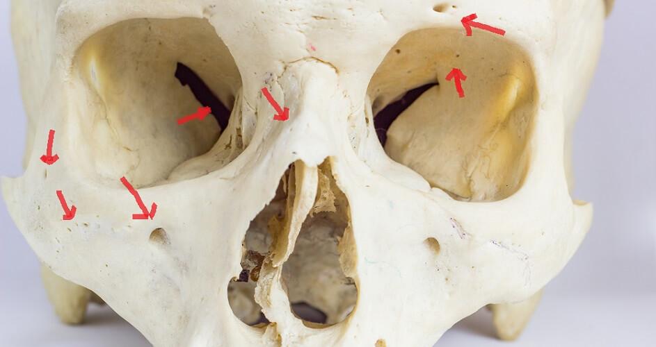 foramen foramina cranial facial