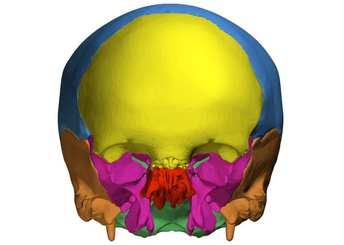 neurocranium skull cap skull base