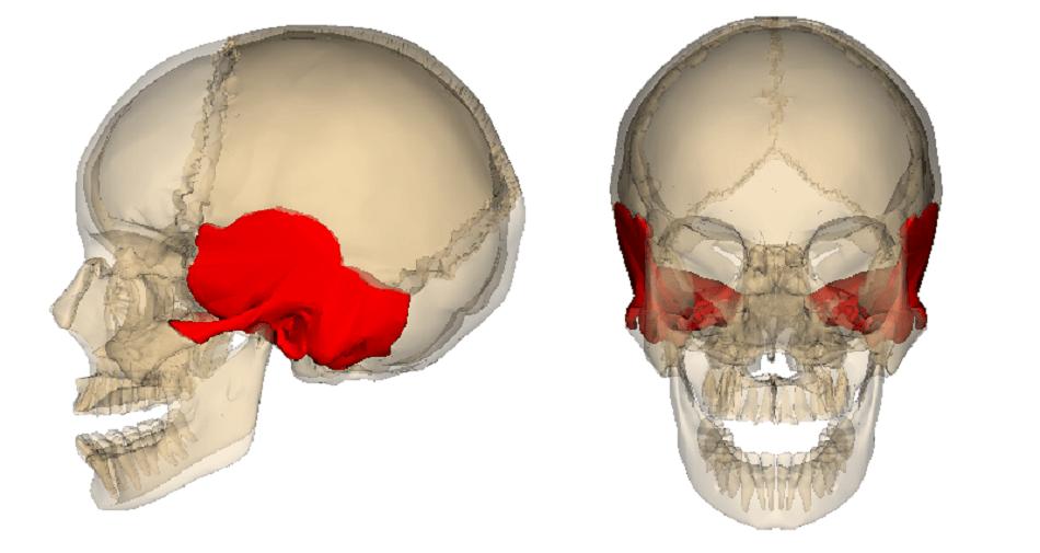 temporal bone os temporale