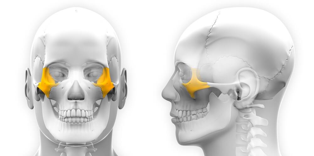 zygomatic bone zygoma