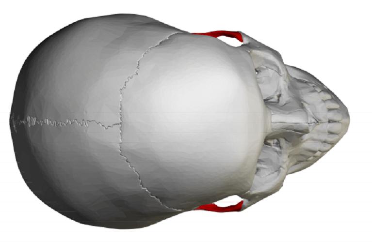 zygomatic process of the temporal bone temporal process zygomatic skull