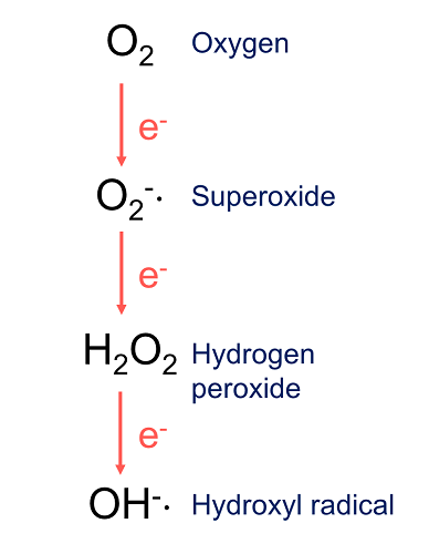 reactive oxygen species superoxide