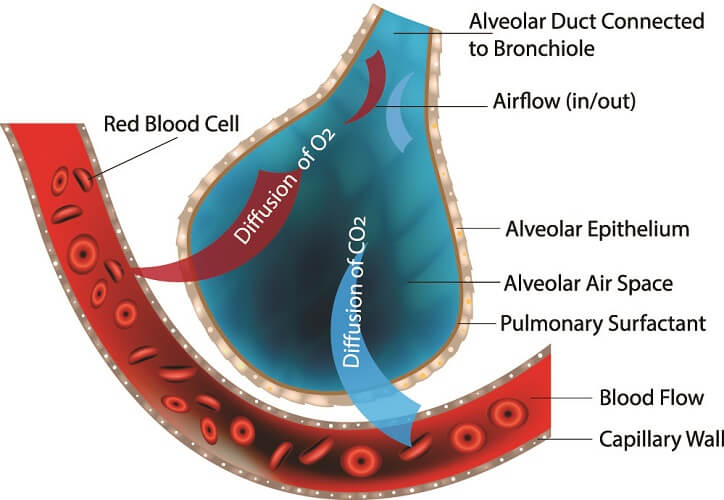 alveolar gas exchange oxygen co2 carbon dioxide o2
