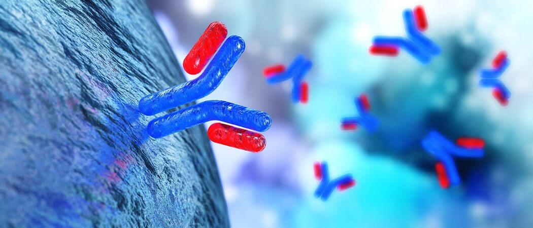 antibodies humoral immunity immune system