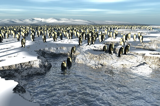 An emperor penguin colony