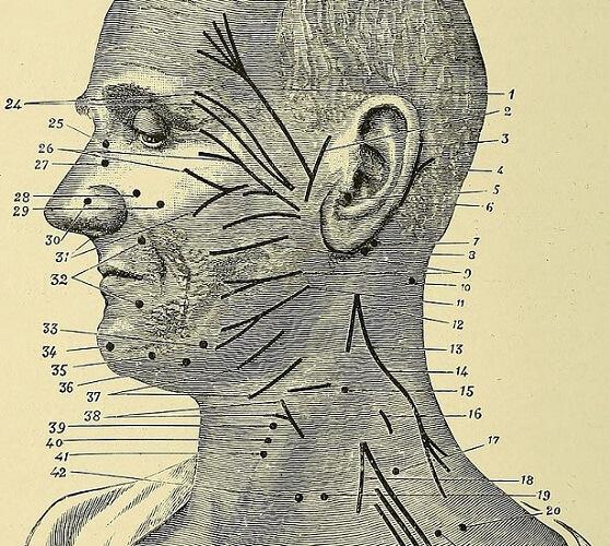 extracranial facial nerve cn vii