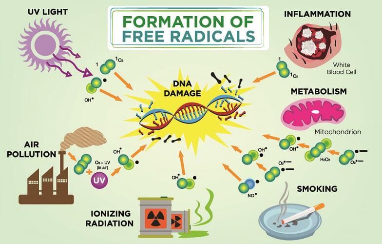 formation of free radicals oxidative stress