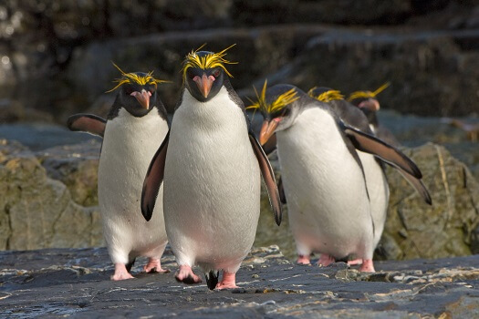 A group on gentoo pengins