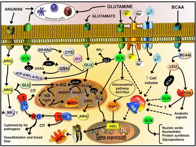 homeostasis oxidative stress cellular