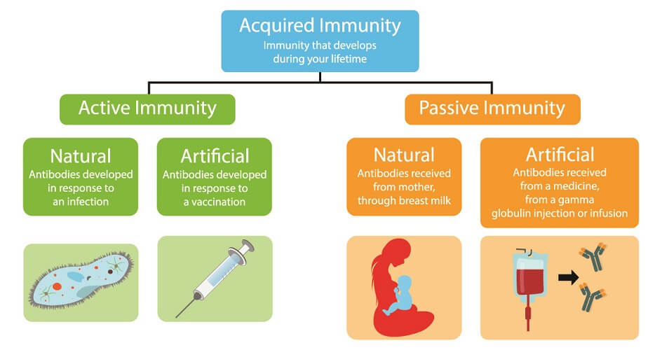 immunity types acquired passive active