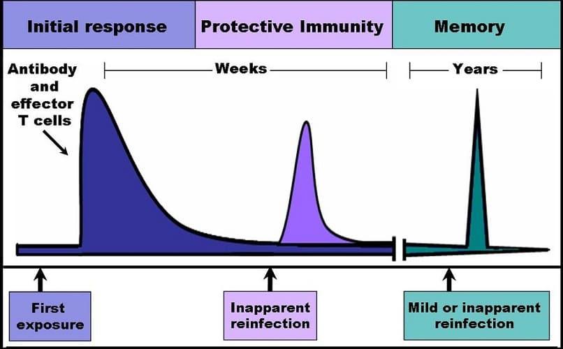 immunity memory B cells innate immunity protective