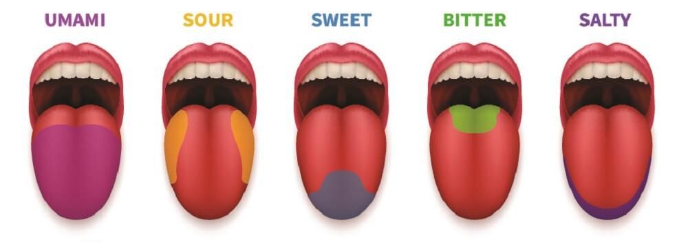 taste sense tastebuds tongue sweet sour umani bitter salt