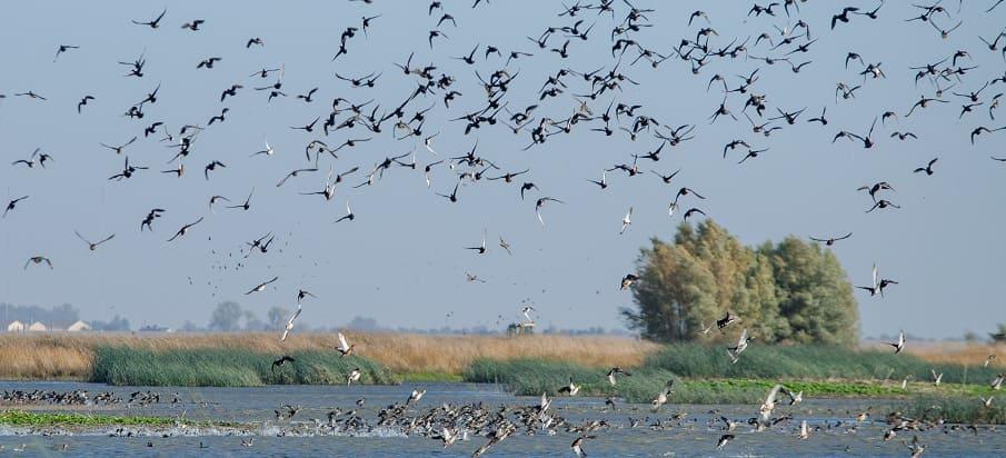 waterfowl water birds