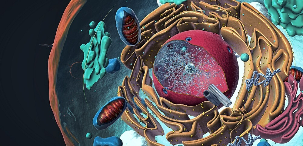 cell organelle organelles cellular nucleus golgi apparatus