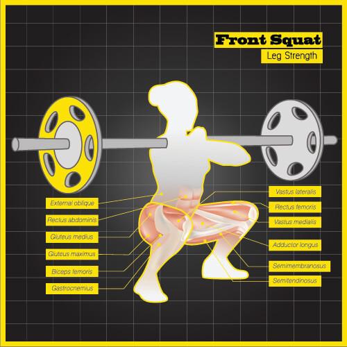 front squat weight lifting glutes gluteus medius maximus minimus hamstrings