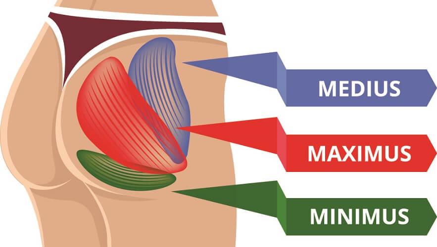 gluteus medius minimus maximus glutes muscles