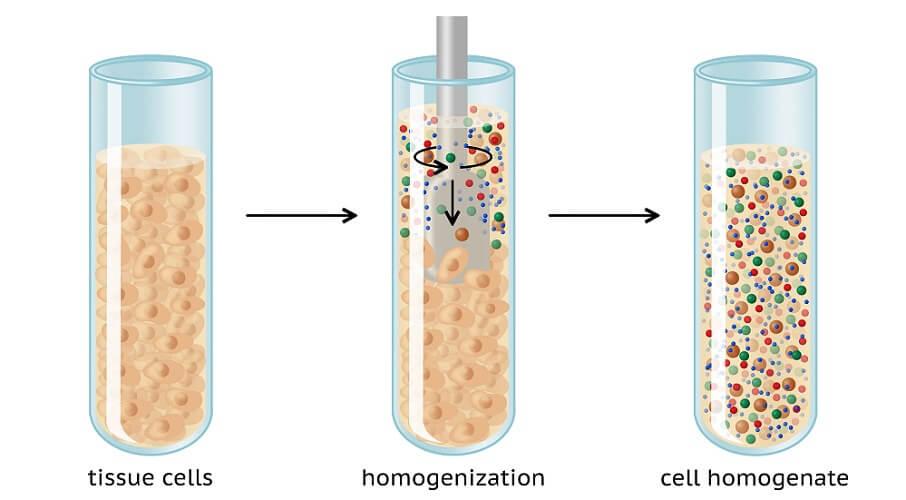 homogenization homogenate cell lysis testing laboratory