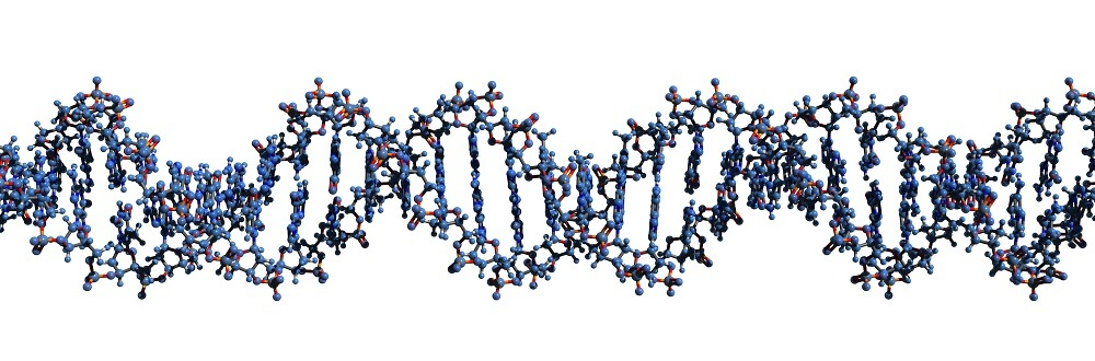 DNA molecule double helix gene expression