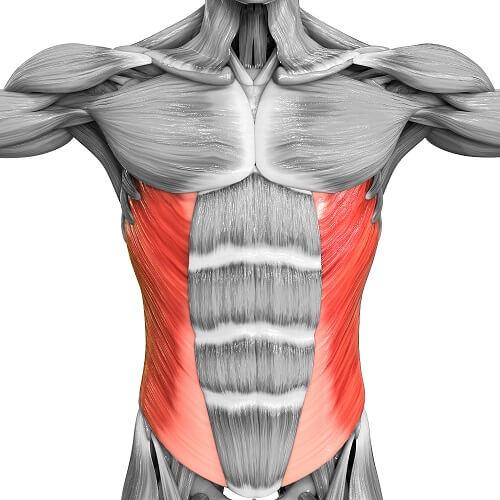 oblique muscle
