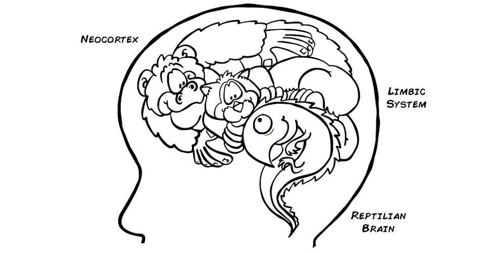 reptilian brain mammalian primate neocortex brainstem cerebellum limbic system