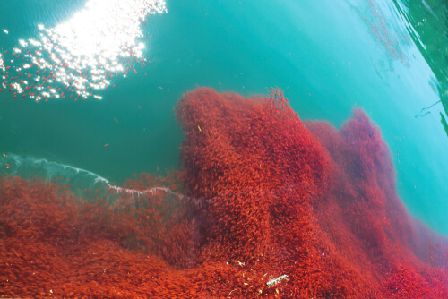 A massive school of krill viewed from above