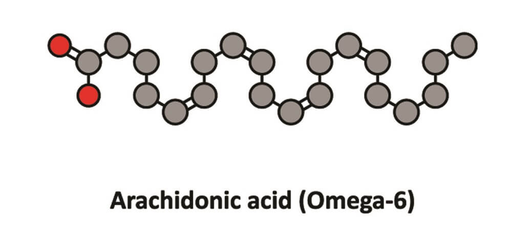 arachidonic acid omega 6 3 nutrient