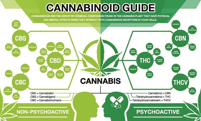 cannabis hashish cannabinoids weed drugs recreational endocannabinoid system