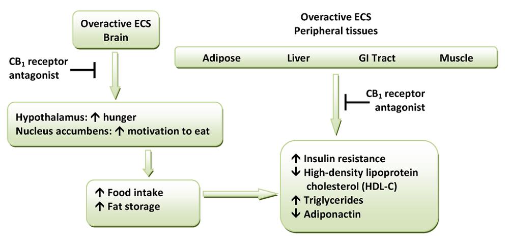 CB1 receptor endocannabinoid system ECS cannabinoid cannabidiol