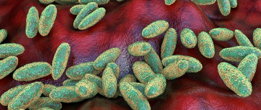 coccobacillus yersinia pestis black death bubonic pneumomic septicemic plague