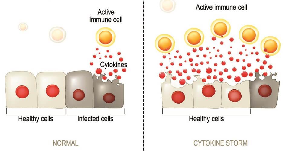 cytokine storm inflammatory positive feedback mechanism