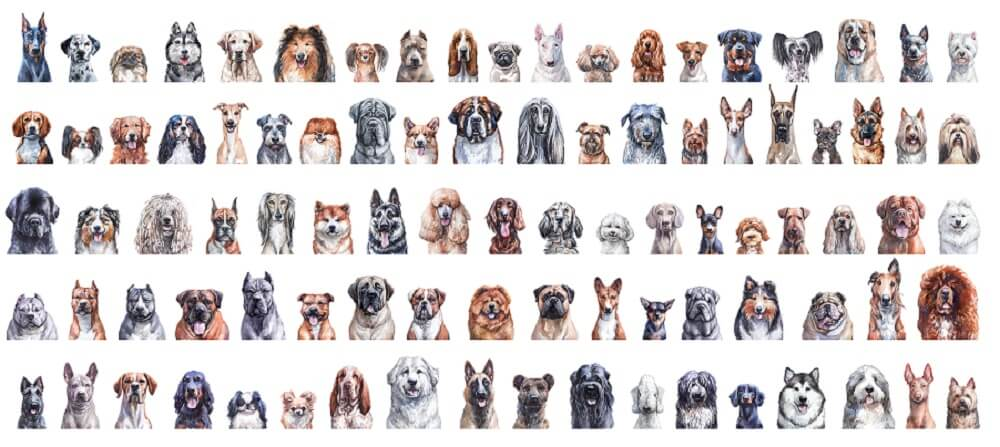 dog breeds phenotypes genotypes