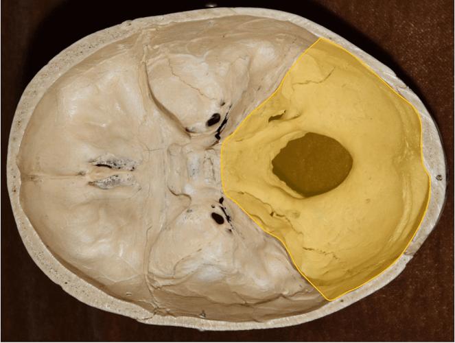 posterior cranial fossa occipital bone foramen magnum
