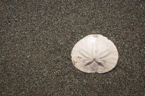 A sand dollar test lying on the sand